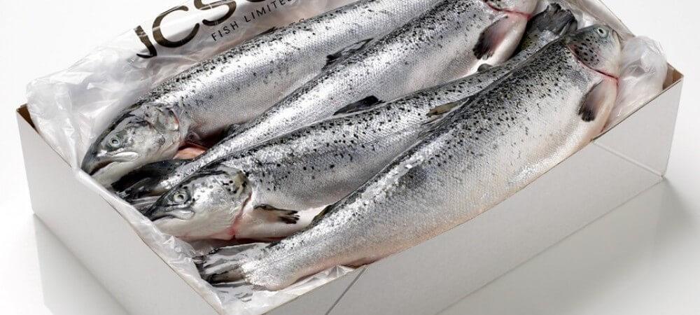 Fresh eco salmon