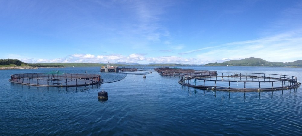 We can trace every product right back to it's origin at the salmon farm