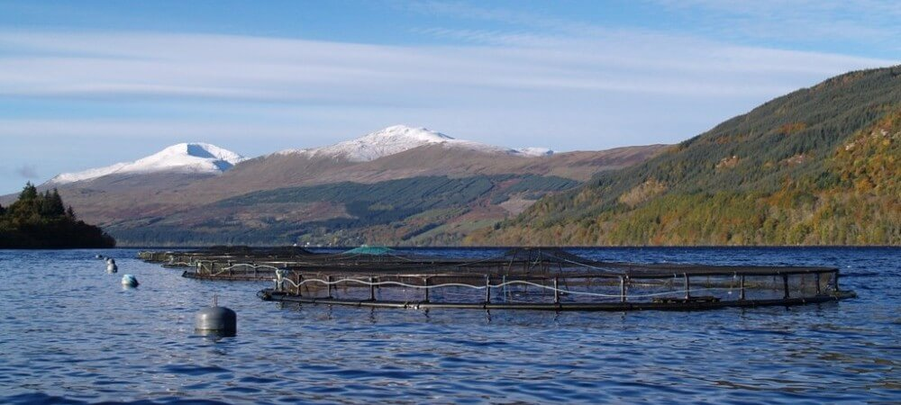 Our organic salmon is sourced from well managed farms in Scotland and Norway