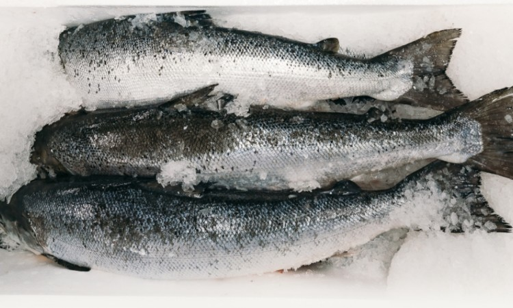 Our fish is fast frozen within hours of harvest