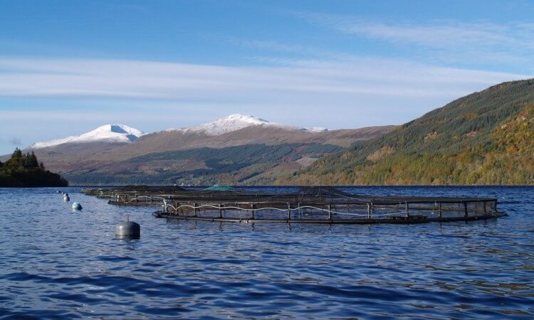 We source from well managed farms in Scotland and Scandinavia